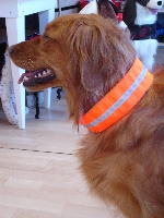 Reflective collar