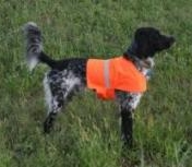 Orange Safety Vest for Dogs