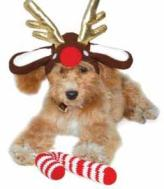 Reindeer Dog Hat